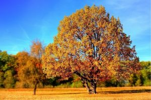 Autumn and Chinese medicine