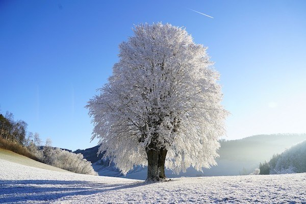 Winter and Chinese medicine