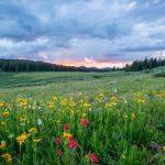 Primavera: el secreto para mejorar tu bienestar
